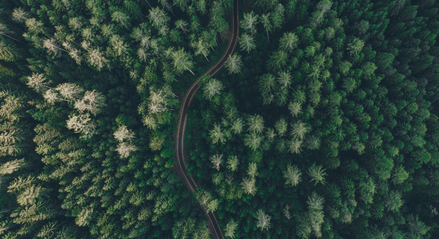 Forêt | Foravi